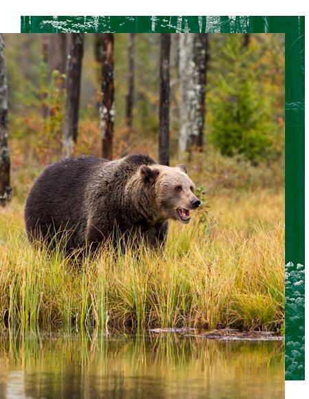 caza internacional, cacerias internacionales, wild hunting spain