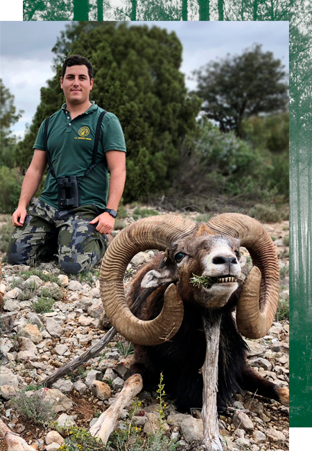 Hunting mouflon sheep in Spain