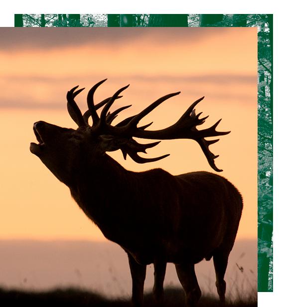 ofertas de caza, ofertas de recechos, ofertas de caza menor