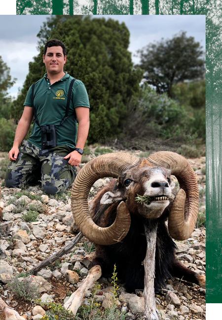 Mufflon Jagd in Spanien
