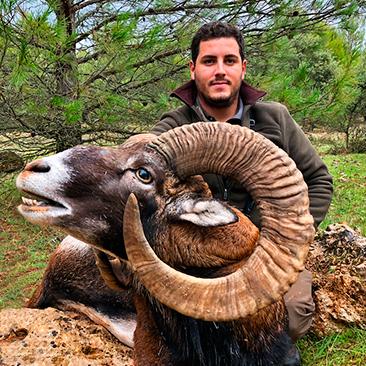 Rececho de muflón en Albacete