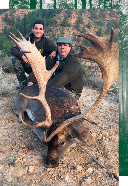 Hunting Fallow Deer in Spain