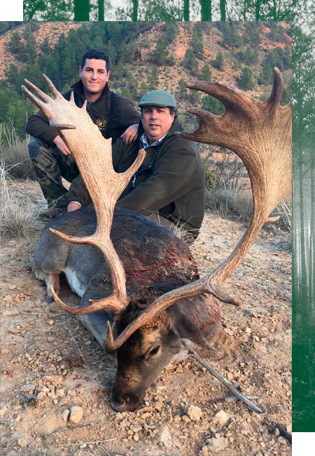 Damhirsch Jagd in Spanien