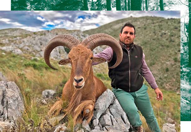 Hunting Barbary sheep in Spain, barbary sheep hunt Spain, stalking barbary sheep Spain, hunt barbary sheep Spain, Aoudad sheep hunting Spain, hunt aoudad sheep Spain