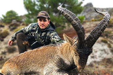Southeastern Ibex hunting Spain, Sierra Nevada Ibex hunting Spain, Sierra Nevada Ibex hunt, Southeastern Spanish Ibex hunt, hunting  Southeaster Ibex, Hunting Sierra Nevada Ibex