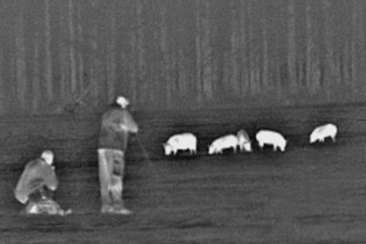 Wild boars stalking or waiting at night in Spain