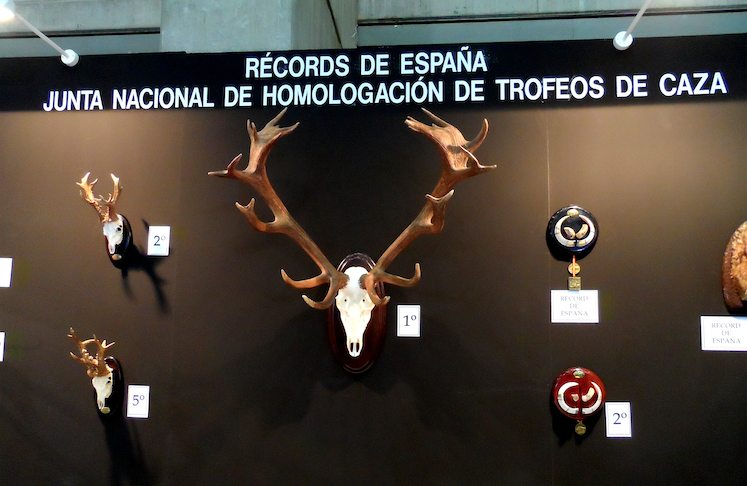 Homologación de trofeos de caza. Medición de trofeos de caza.