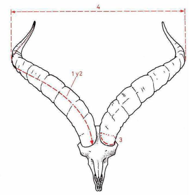 Homologacion trofeo de macho montes, manual homologacion puntuaciones trofeo macho montes