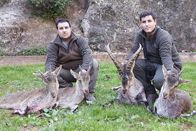 Rececho de macho montes selectivo, cazar macho montes selectivo, recechar macho selectivo, cazar macho selectivo beceite, rececho selectivo beceite