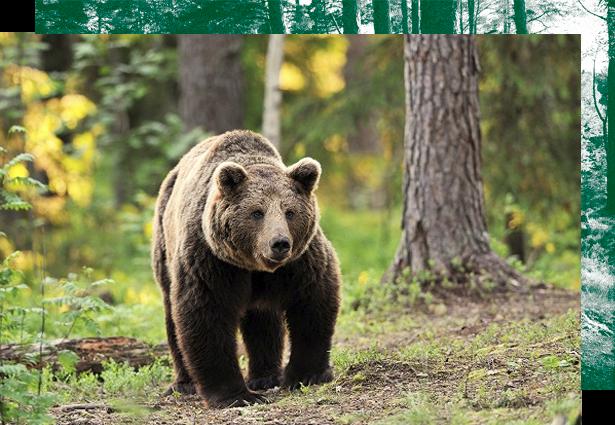 caza en Rumania, cazar en Rumania, cacerias en Rumania, cazar osos Rumania, cacerias Rumania