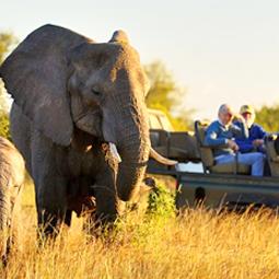 safaris en Africa, cazar en Africa, cazar en Sudafrica, cazar