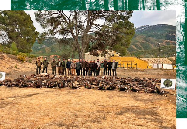 Driven Hunting in Spain. Traditional Monteria, driven hunt Spain, driven hunt wild boars Spain, driven hunt deer Spain