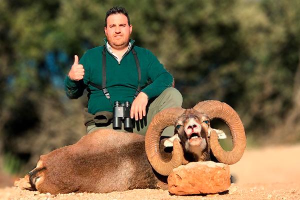 caceria muflon oro, cazar muflon oro España, rececho muflon oro España, recechos, España caza garantias, cazar muflon España