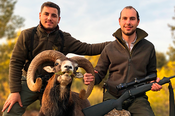 cazar muflon oro, rececho muflon oro, recechar muflon oro, excopesa caza, caceria muflon oro