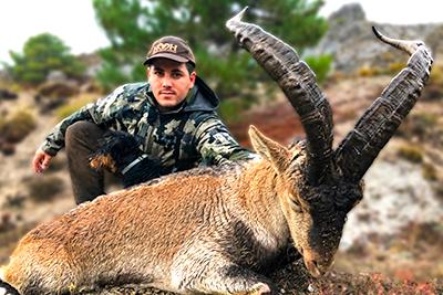 Sierra Nevada spanish ibex guarantee, ibex hunt sierra nevada, ibex hunting Sierra Nevada Southeaster, sierra nevada ibex hunt, hunting Spain, hunting ibex spain, spanish ibex hunt, hunting warranty Spain, blaser safaris hunting Spain, Toquero hunting Spain, Salvaforte hunting Spain, Salvaforte ibex hunting Spain, caccia Spanien, oxota