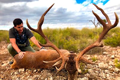 empresa caza seria española recechos, caza recechos ciervo oro, rececho ciervo oro, recechar ciervo, caza venados abierto, caza venados cercado, caza salvaje, caza garantizada, cazar profesionales