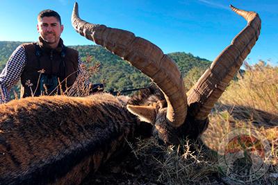 southeaster ibex hunt Spain, economic ibex hunt Spain, hunting ibex southeaster Spain, economic cheap ibex hunt Spain, Professional hunting ibex Spain, company hunting ibex Spain, jagd südosten Spanien, blaser safaris Spain, Toquero hunting Spain, iberhunting ibex hunt Spain, Professional hunting ibex Spain, caccia Spanien, oxota, ibex zone hunt, 4fouribexhunt, grand slam club ovis associate Spain